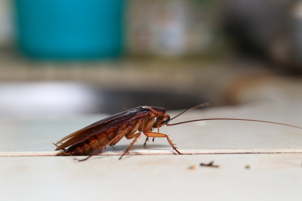 Building and Pest Inspections, Pest Inspection, Pest Solutions, Excel Pest Solutions, Pest control
